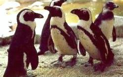 Snowparties.com Penguins